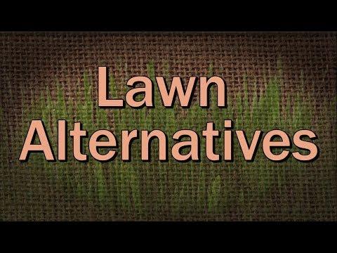 Grass Lawn Alternatives – Family Plot