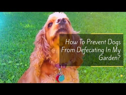 How To Prevent Dogs From Defecating In My Garden?