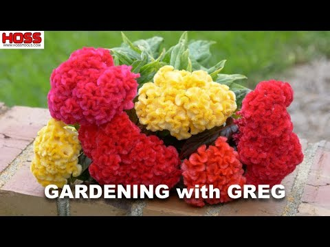THE MOST HEAT-TOLERANT FLOWER FOR YOUR GARDEN!