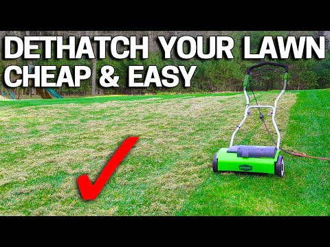 How to DETHATCH an UGLY LAWN - CHEAP