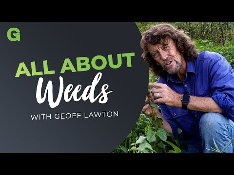 All About Weeds
