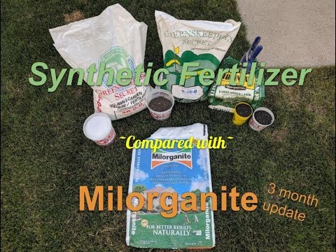 Milorganite vs synthetic fertilizer (2 month update)
