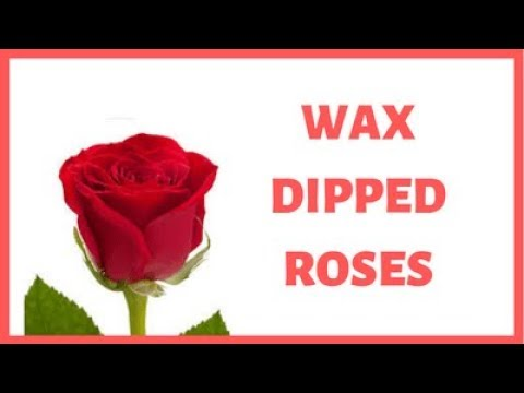 Wax Dipped Roses - How To Preserve Flowers - Preserved Roses DIY