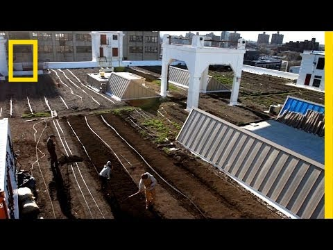 Farming on a Rooftop | National Geographic