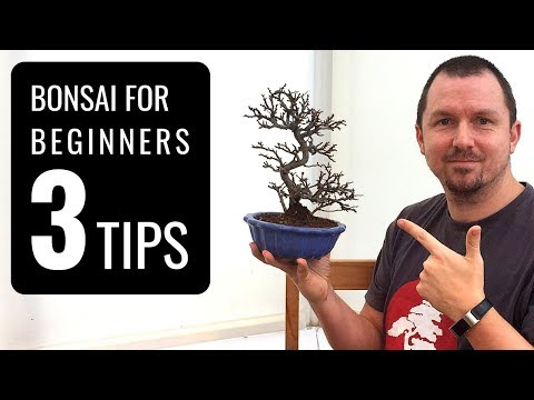 Bonsai Trees for Beginners: 3 Tips for Starting into Bonsai