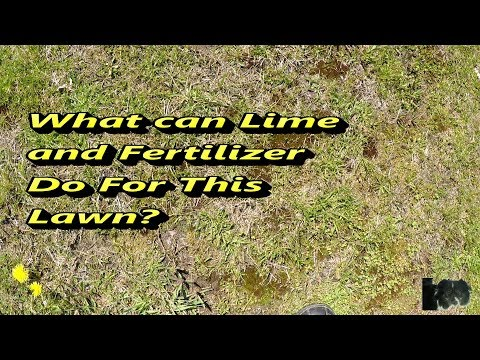 Results of adding Lime and Fertilizer to Lawn Before and After