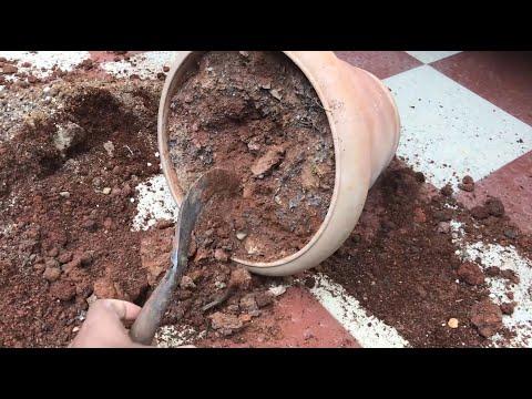 5 STEPS TO REJUVENATE EXPIRED OLD POTTING SOIL MIX | Revitalize Old Garden Soil