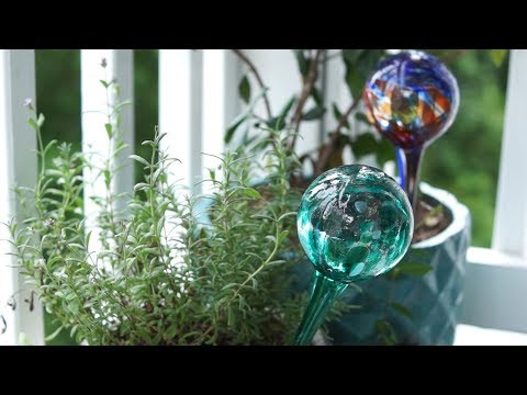 Watering globes for outdoor & house plants – Do they work? How to use them