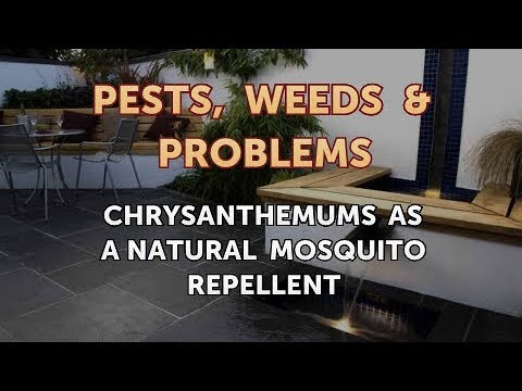 Chrysanthemums as a Natural Mosquito Repellent