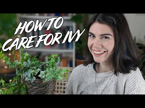 How To Look After Your Houseplant Ivy (Including Propagating And Repotting)