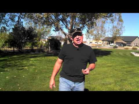 Aerating Your Lawn - Why, When and How