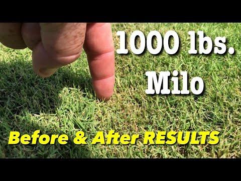 Milorganite Fertilizer Before & After 1000 POUND Application Bermuda Grass UPDATE