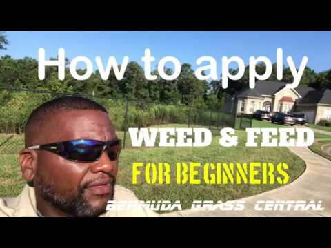 How to apply Weed and Feed for beginners, plus Scotts Weed and Feed