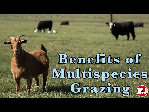 Benefits of Multi-species Grazing | May 10, 2019