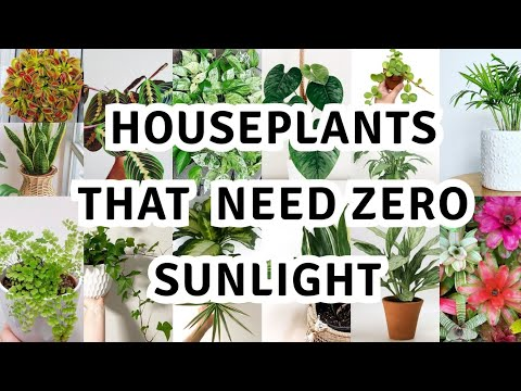 17 houseplant that can survive darkest corner of your house / The Best Low Light Houseplants